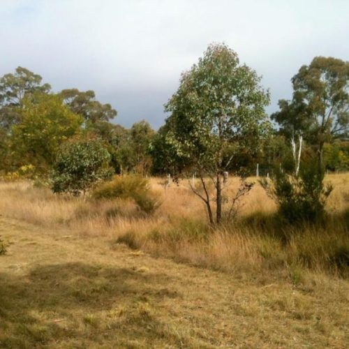 project coming soon yerrinbool bushfire and environmental