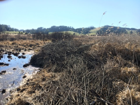 weed-control-wingecarribee-swamp bowantz