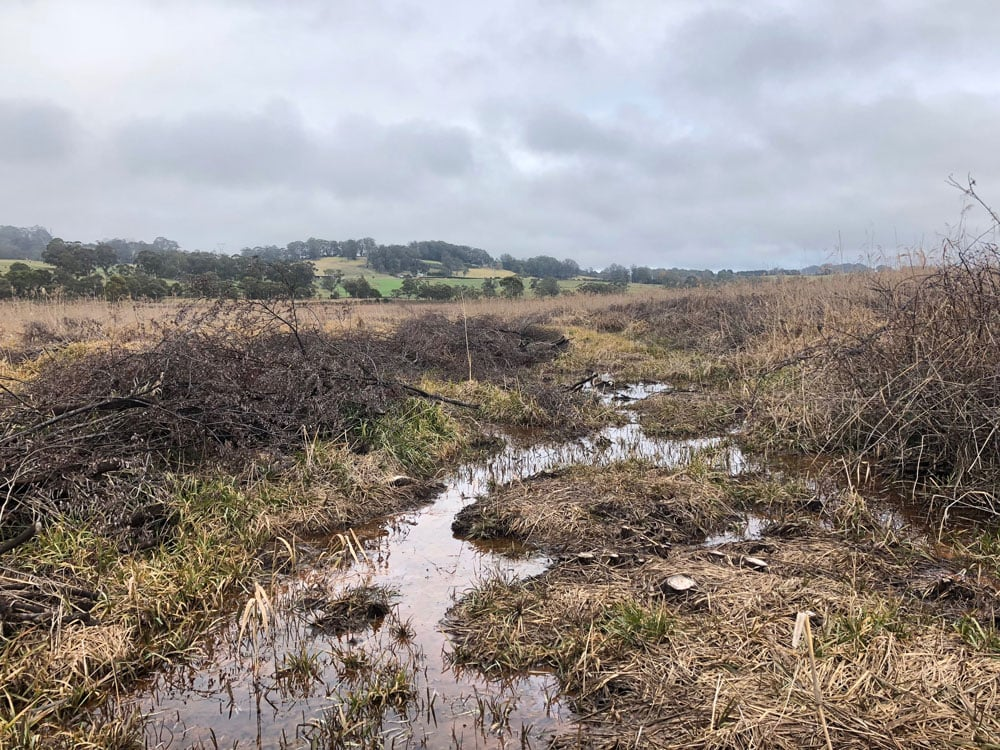 Wingecarribee Swamp Special Catchment Area weed control & Environmental Management