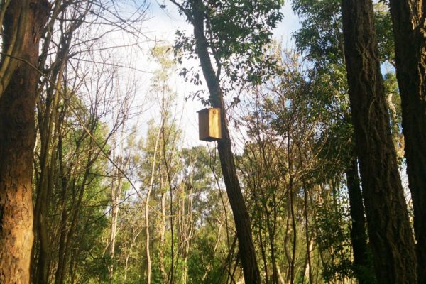 Natural-Area-Management-NSW-Nesting-Boxes-Bowantz-Bushfire-and-Environmental-Consultants
